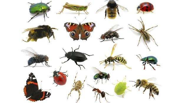 La entomolog a forense cuando los insectos aportan - Insectos en casa fotos ...