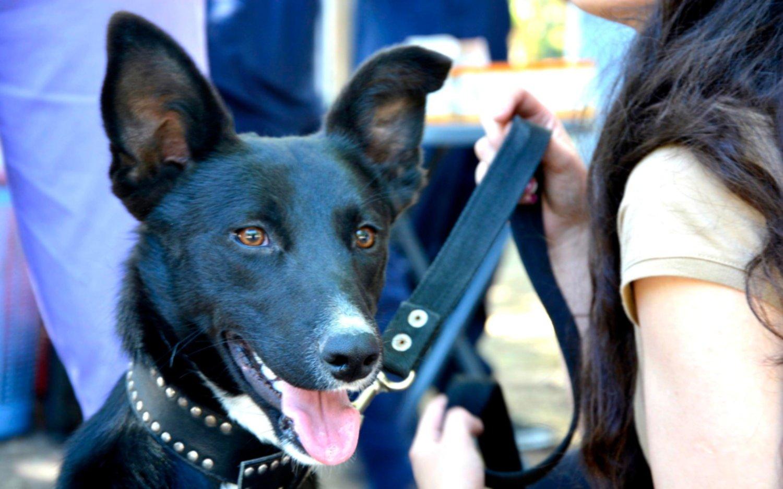 """El Municipio organiza la """"Semana animal"""" con actividades de concientización y atención veterinaria"""