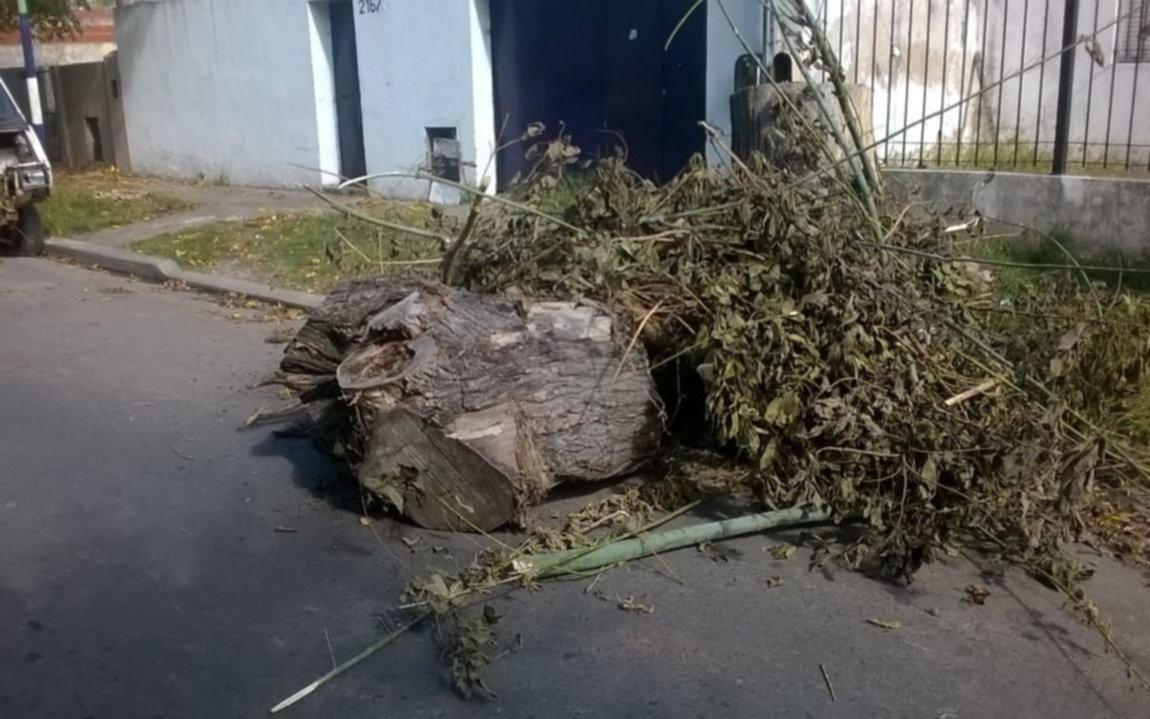 Reclaman para que saquen un tronco enorme en plena calle