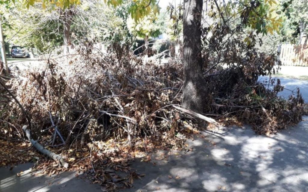 Montaña de ramas y preocupación en Olmos
