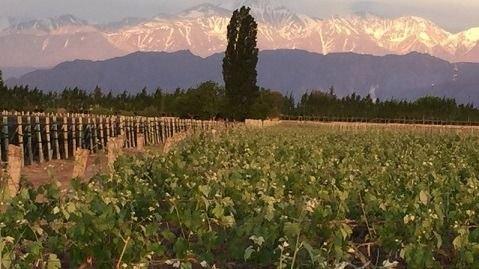 Desde Luján de Cuyo, llegan las nuevas cosechas de Spielmann Estates