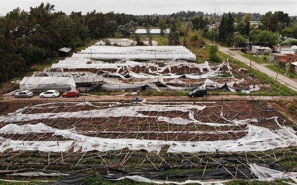 Impulsan invernaderos de mayor resistencia para el cordón frutihortícola local
