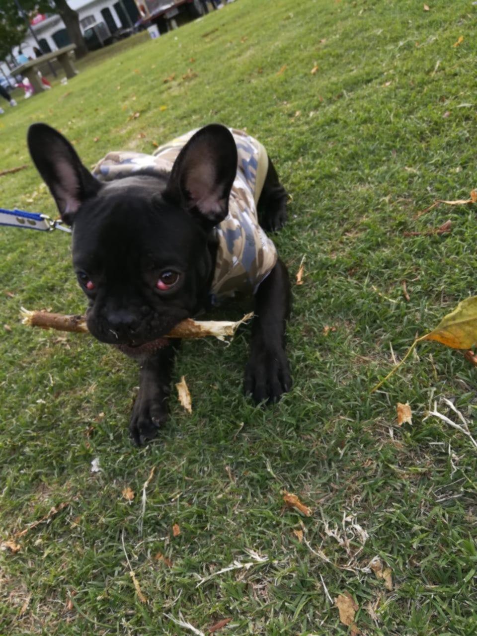 Olmos: saquean una casa y se llevan hasta el perro