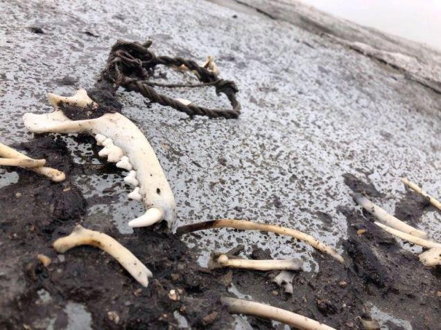 Glaciar derretido revela un paso de montaña utilizado por los vikingos
