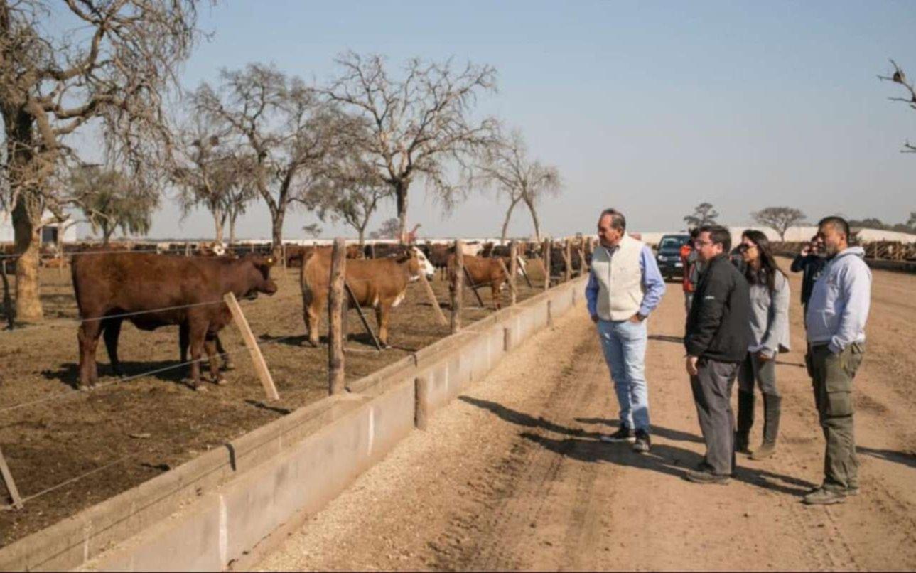 Encuentran más ganado denunciado como robado en el campo de los Alperovich