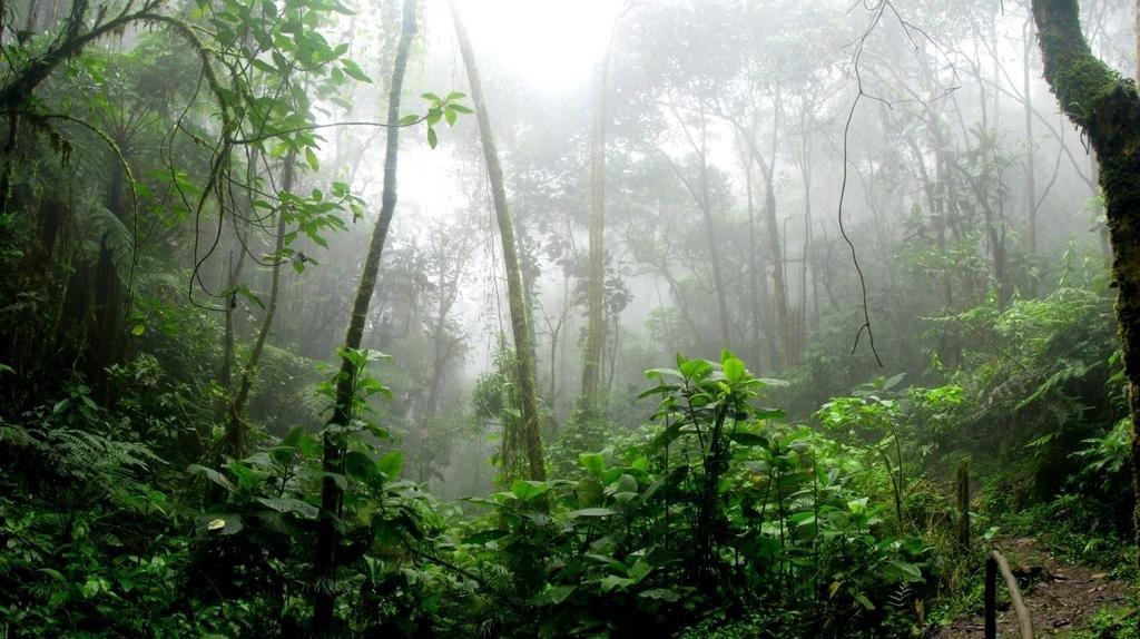 Mal, pero no tanto: aniquiló a los dinosaurios pero ayudó a crear la selva amazónica