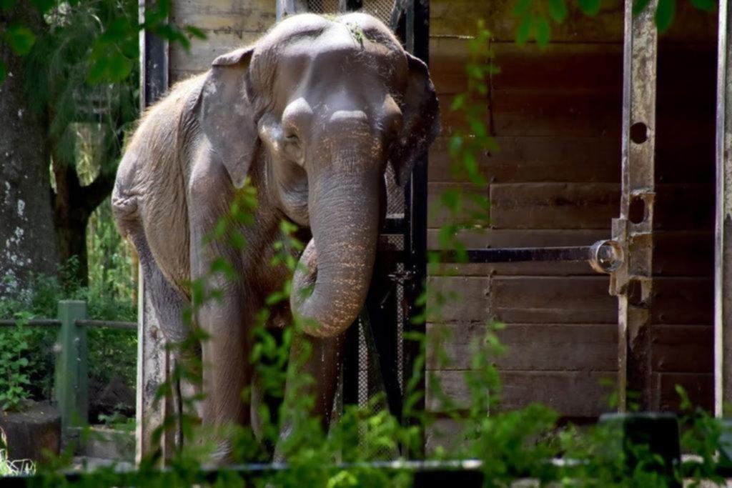 Pelusa es la protagonista de la primera causa en la fiscalía de maltrato animal