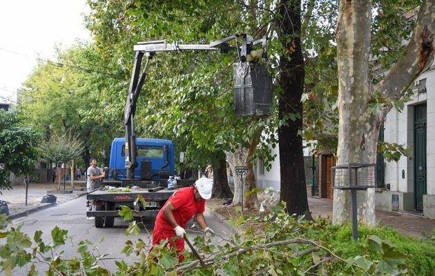 """Van por el """"récord de poda"""": este año esperan que las motosierras pasen por unos 28 mil árboles"""