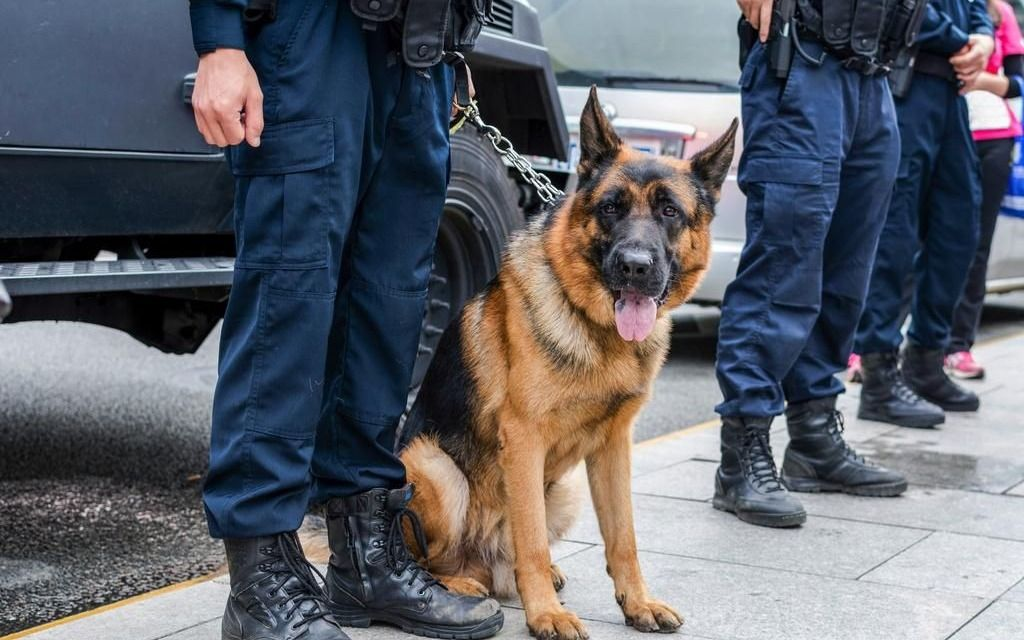 Las condiciones de trabajo de los perros policías, en la mira