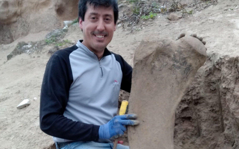 Hallan restos fósiles de un perezoso gigante de más de 500 mil años en Mar del Plata