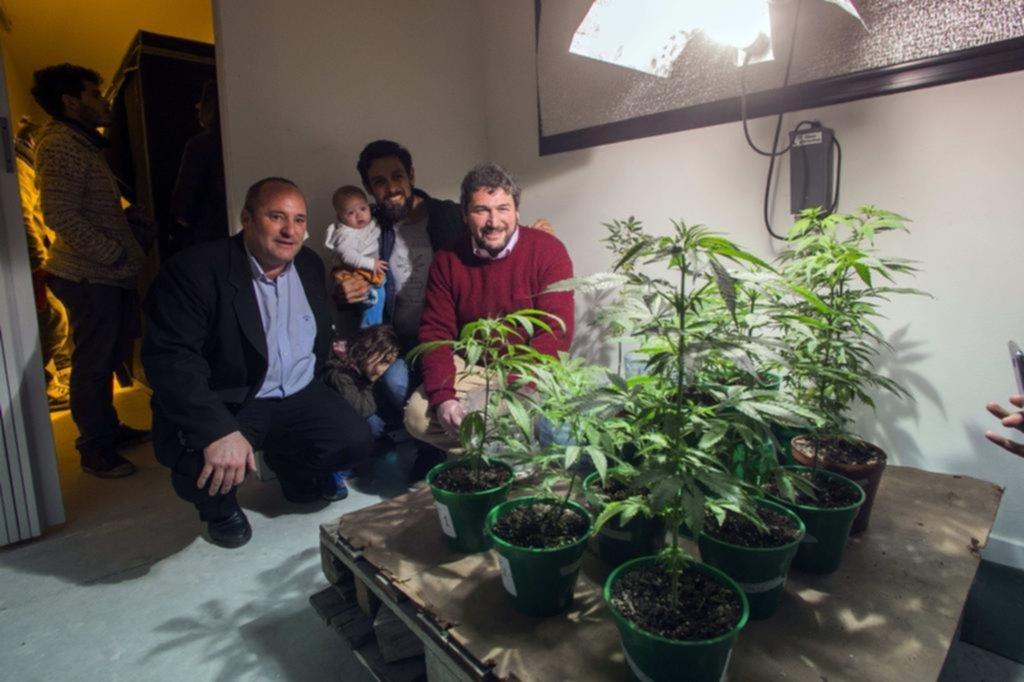 Presentan los primeros estudios realizados con cannabis platense