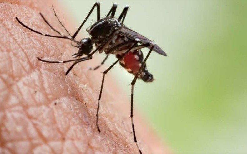 La OMS confirmó que la Argentina está libre de malaria