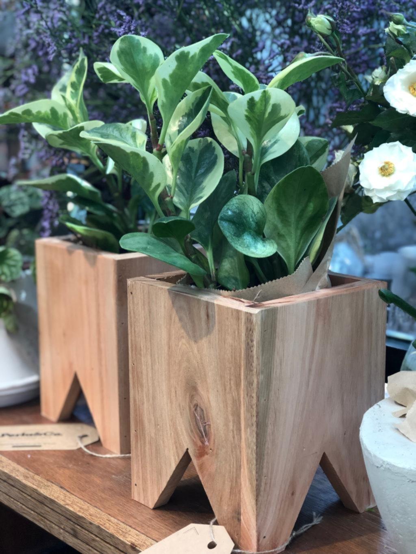 Decorar con plantas de interior