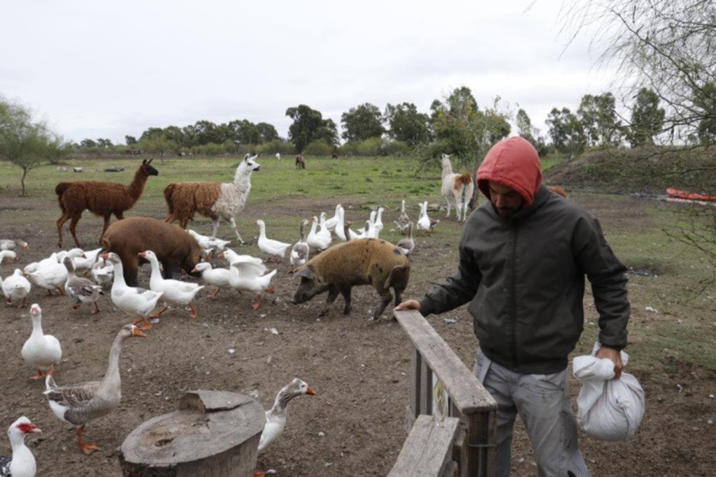 """Del cemento a la libertad del campo, la nueva vida de los animales de la """"Repu"""""""