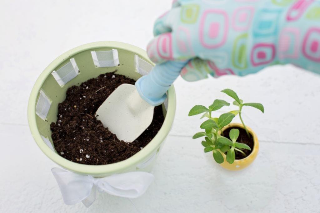 Plantas en casa: belleza y salud