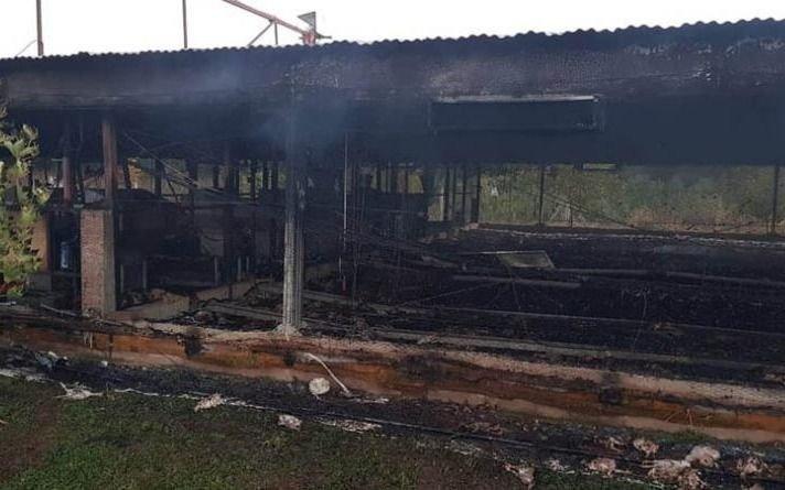 Un incendio arrasó con 13 mil pollos de una avícola