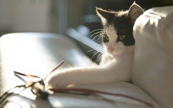 El motivo de por qué los gatos tiran tus cosas y cómo detenerlos