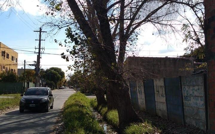 Un árbol muy inclinado causa temor en 28 y 81