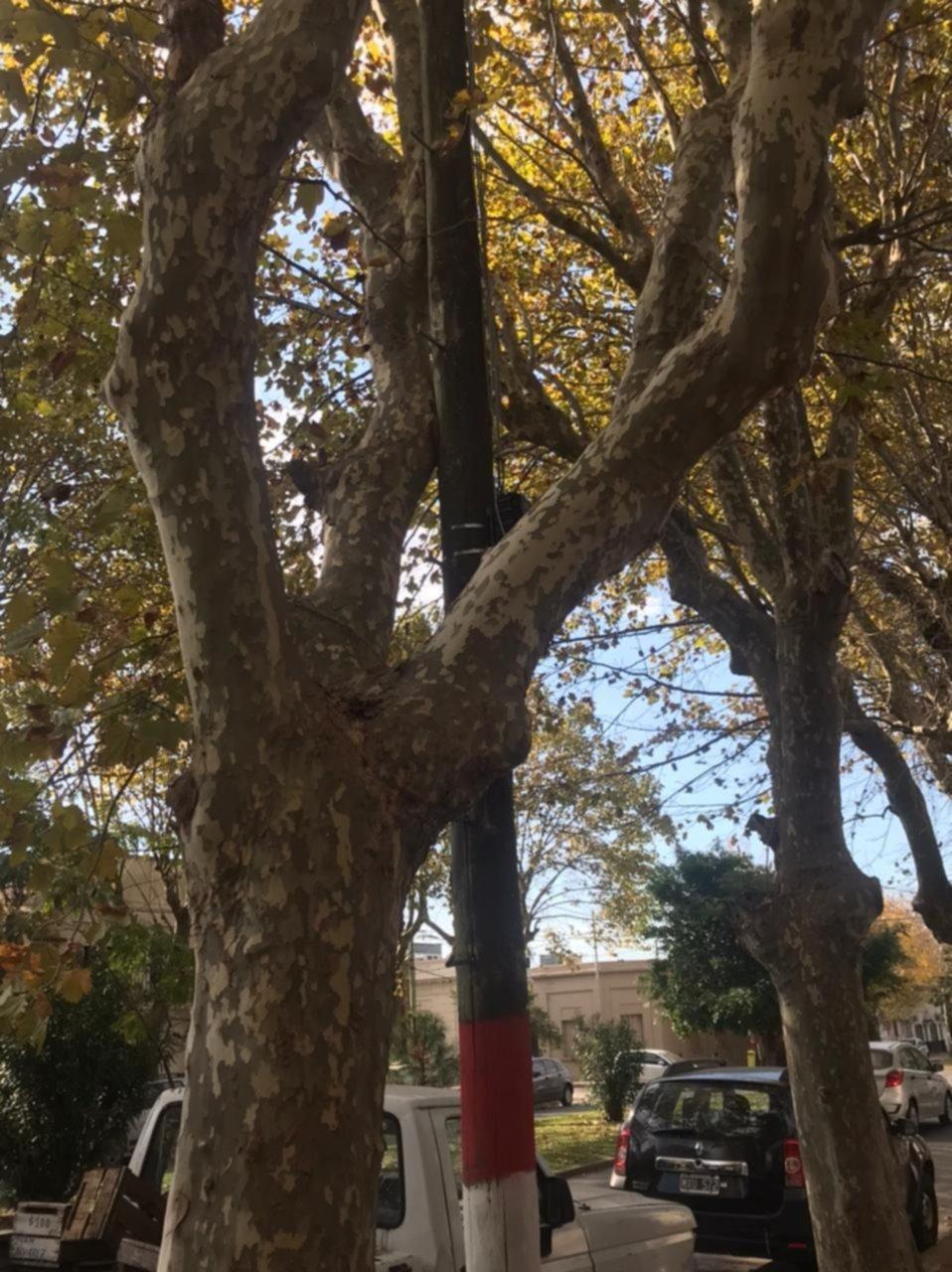 """Queja por """"una rama gigante que pasa por mi techo, que si secae genera un desastre"""""""