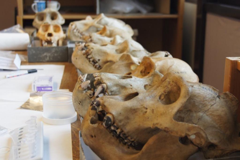 Un aliento: reconstruyen la historia evolutiva de nuestras bacterias orales