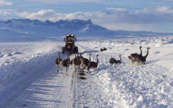 Cesan nevadas fuertes pero hay rutas anegadas en la Patagonia