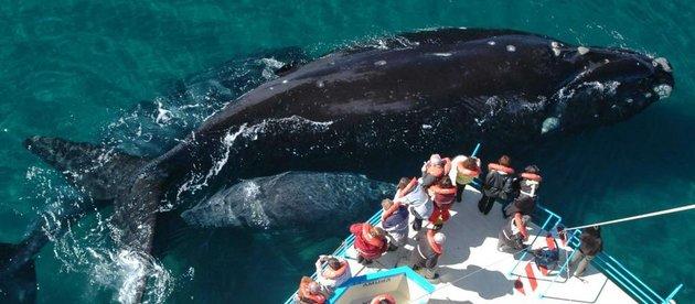 Avistaje de ballenas en Chubut - Turismo