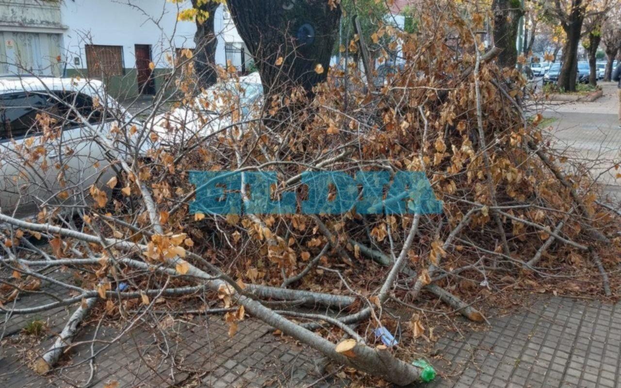 Piden recolección de ramas tras poda realizada hace 20 días