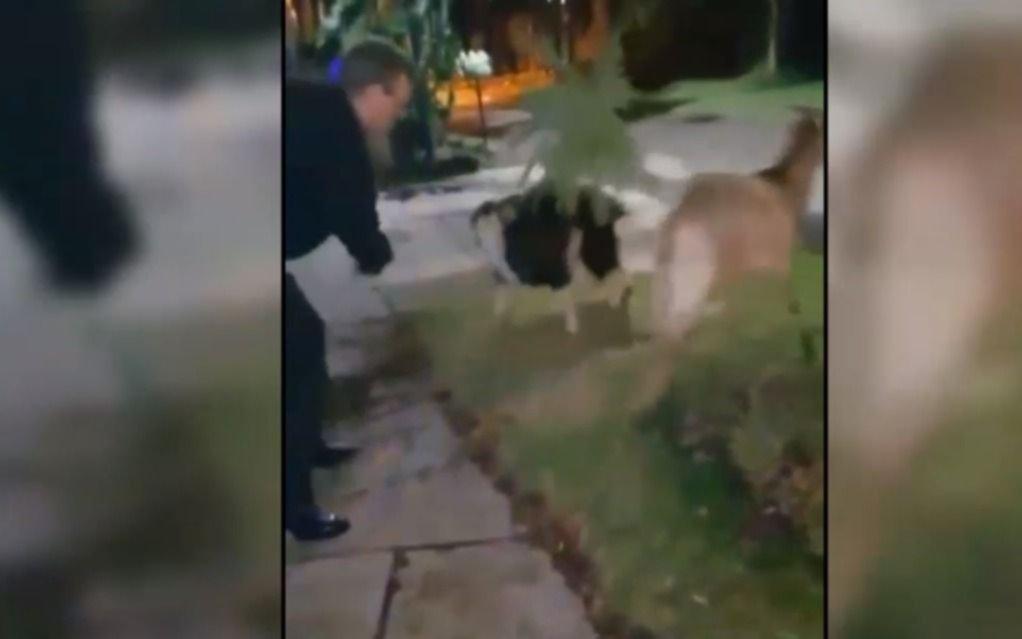 Conzi, con domiciliaria por la muerte de Schenone, salió a pasear cabras