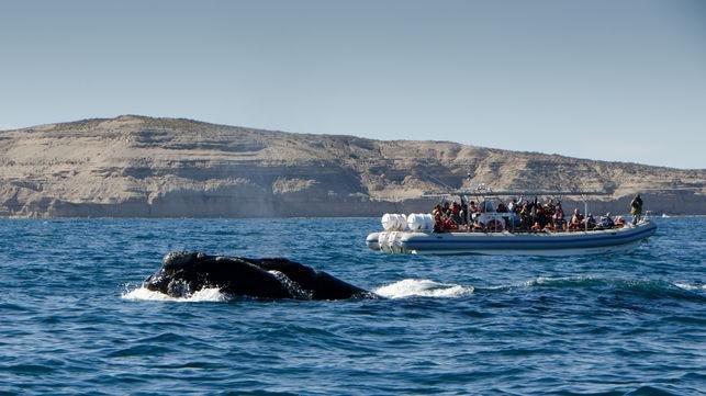 Las ballenas ya se muestran a pleno