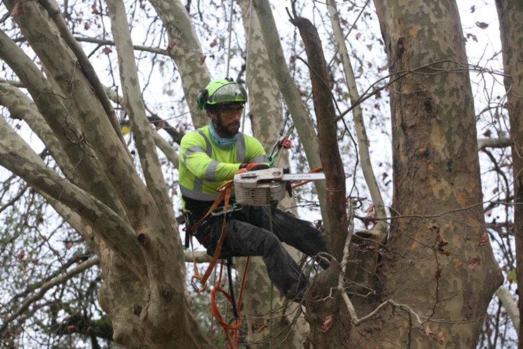 Tres arboristas dieron cátedra en 60 y 118 y alertaron sobre el futuro del verde platense