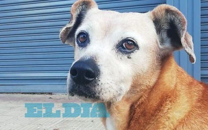 Preocupación vecinal por la desaparición de Luly, un personaje del barrio de 8 y 39
