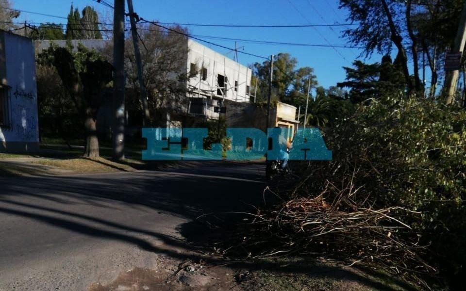 """Ante """"riesgo de accidente"""", piden recolección de ramas en Arana y 22"""