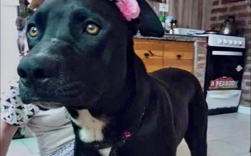 Condenan a un policía a un año de prisión por matar a una perra con su arma