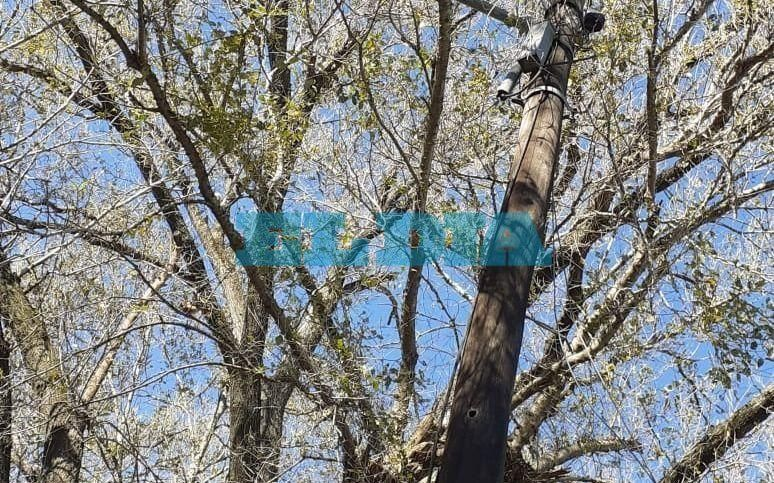 Insisten con el pedido de poda de un árbol ubicado en13, entre 524 y 525