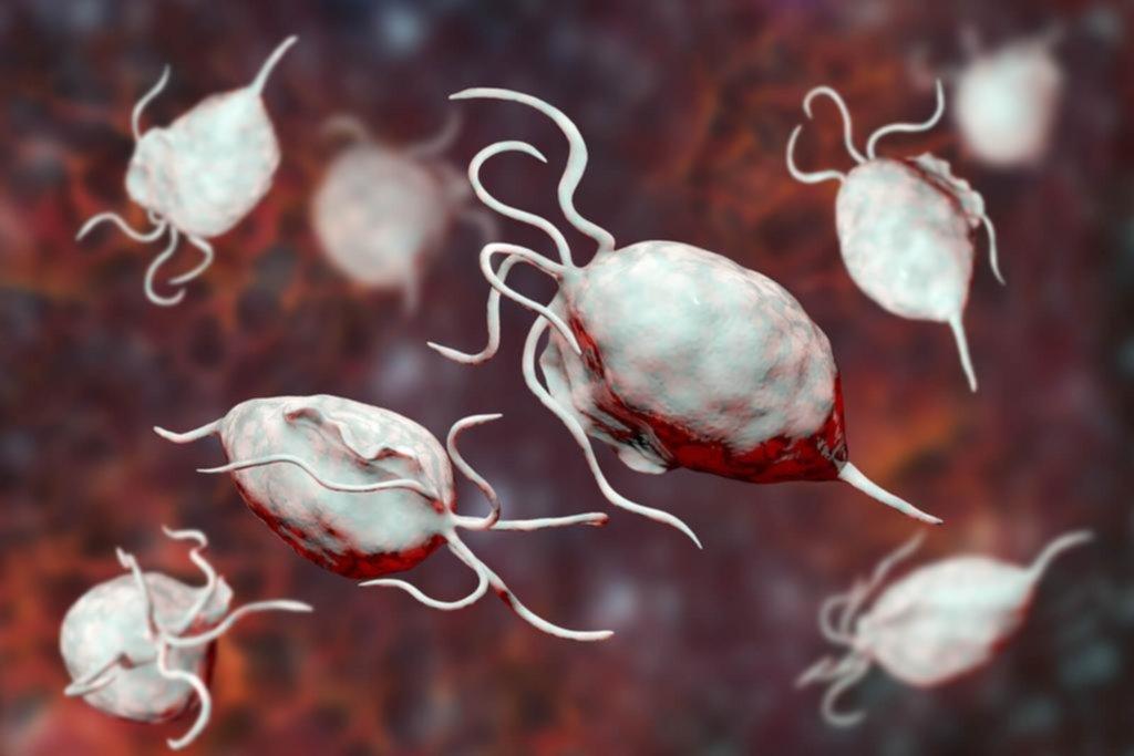 Tricomoniasis: un parásito común que media en las relaciones sexuales