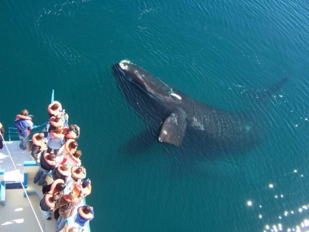Arrancó el avistaje de ballenas