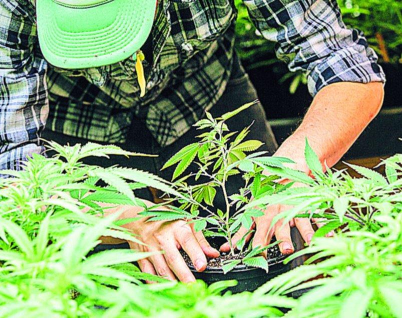 A 30 años de la ley de drogas, la tenencia sigue en debate