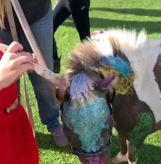Delfina Blaquier pintó un pony con glitter, no se lo perdonaron y pidió perdón