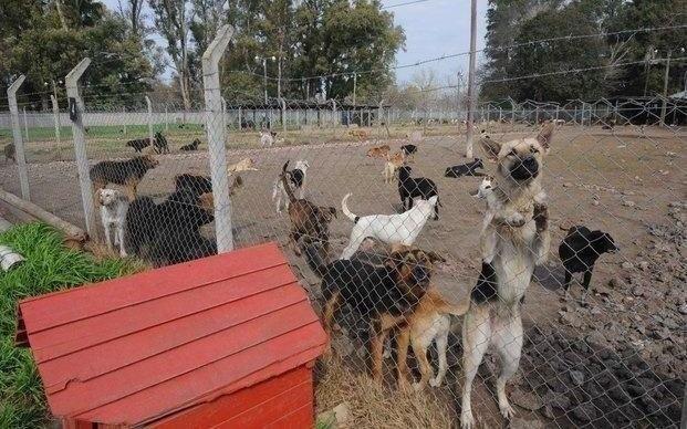 Un refugio para ayudar a los perros en Seguí necesita donaciones para darles de comer