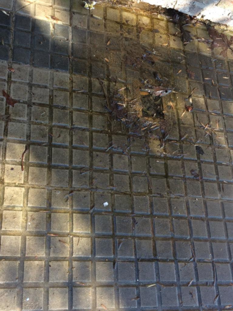 Una pérdida de agua está aflojando las veredas