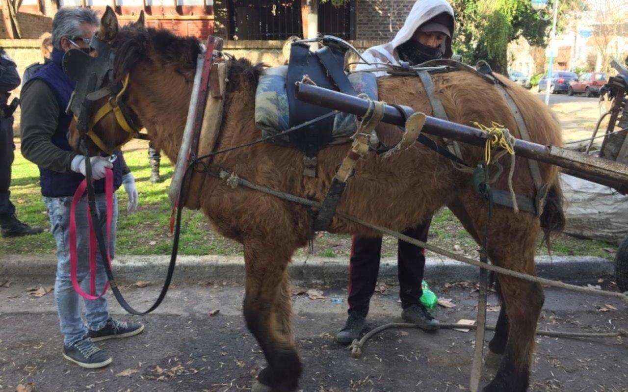 Aprehenden a un joven en El Mondongo acusado de maltratar a una yegua que tiraba un carro