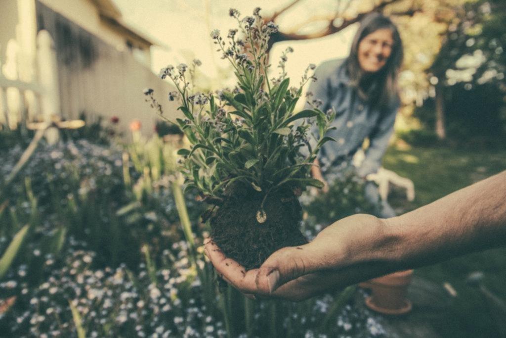 Cómo cuidar las plantas y flores