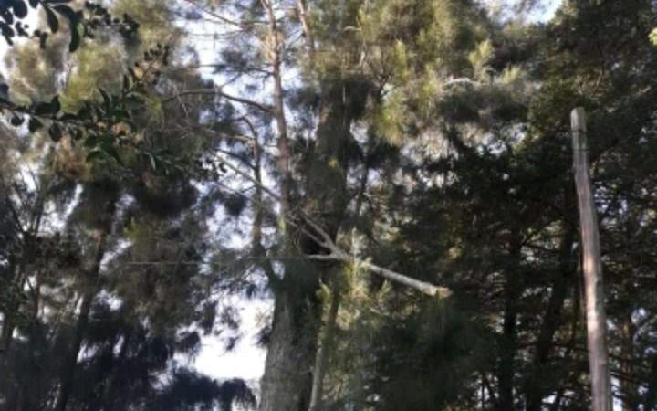 Reclamo por desprendimiento de ramas en Villa Elisa