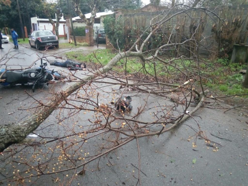 Cayó un árbol en Villa Elisa y murió un motociclista que iba a su trabajo