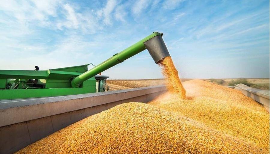 Argentina quedó afuera del top ten en el ránking de los exportadores agrícolas