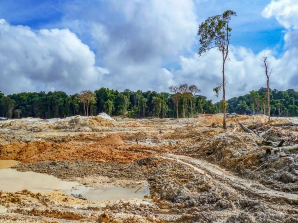 Los árboles podrían no absorber más CO2 a partir del año 2100