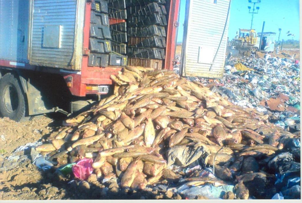 Tras veinte años de prohibición, habilitan la pesca del sábalo en el Río de la Plata
