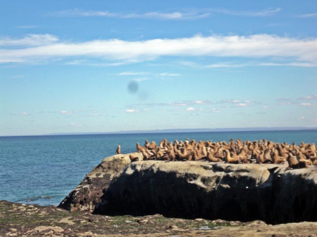 Lobos marinos en Punta Marqués