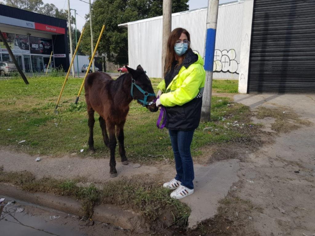 Rescataron a un potrillo que era maltratado por un joven en San Carlos