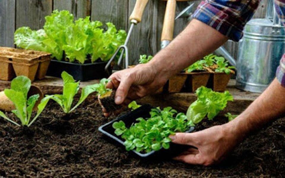 Capacitación para docentes sobre huerta agroecológica y alimentación saludable
